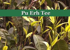 Pu-Erh-Tee - roter Ziegeltee aus der chinesischen Provinz Yunnan