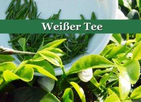 Weißer Tee - der Kaisertee - wertvoll und aromatisch