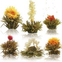 Teeblume - Mittlere Größe - Weißer Tee